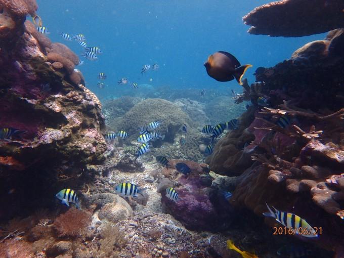 レンボンガン島の海中