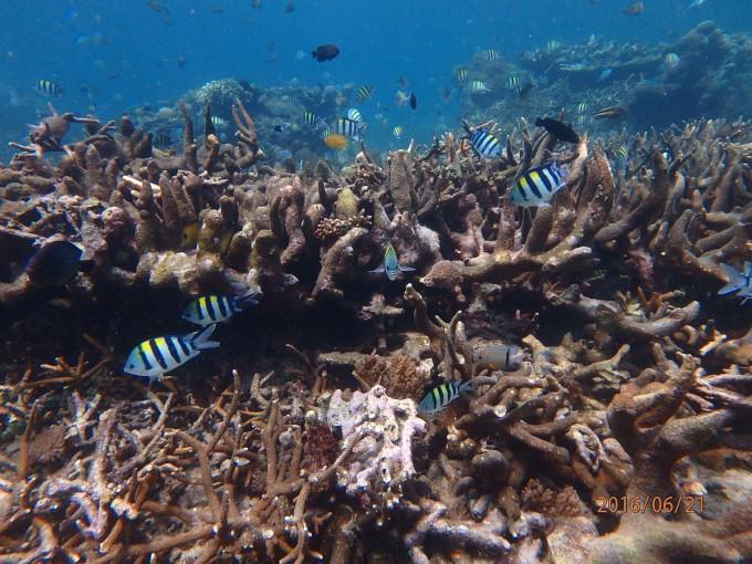 海中のサンゴ礁と魚