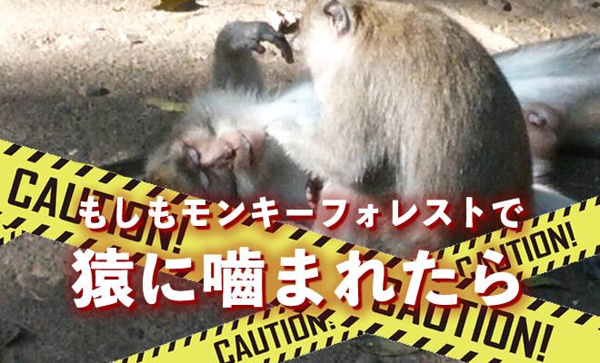 猿に噛まれたら