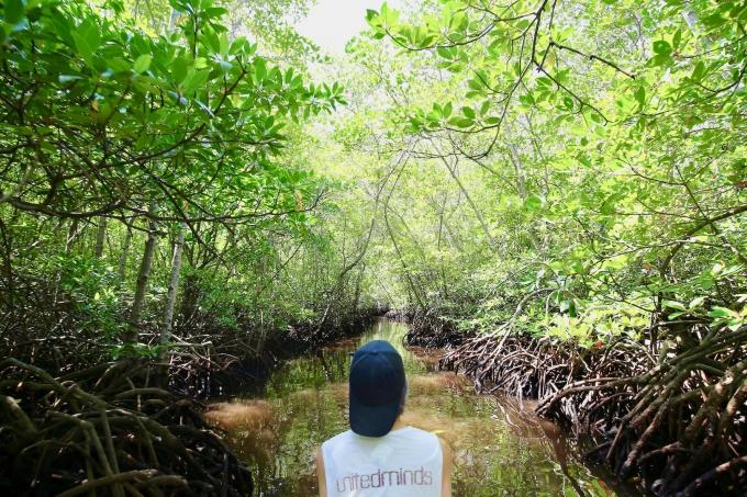 レンボンガン島のマングローブ林